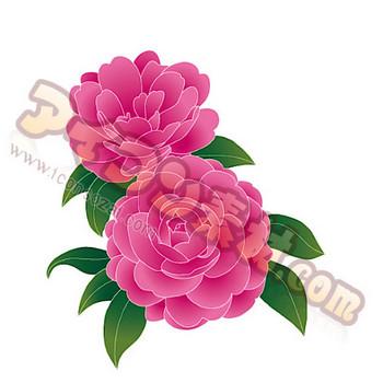 さざんか 山茶花 花 FLOWER 植物の素材・マーク・イラスト | アイコン素材.com