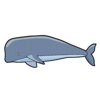 クジラのイラスト | 【無料配布】イラレ/イラストレーター/ベクトル パスデータ保管庫【ai・eps ベクター素材】