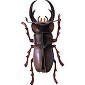 昆虫クワガタムシ 無料素材 ダウンロード | ペーパーミュージアム