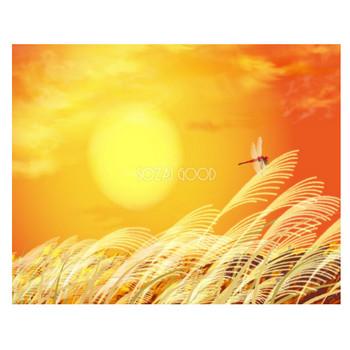 秋の背景イラスト「夕暮れのすすき」 無料 フリー34526 | 素材Good