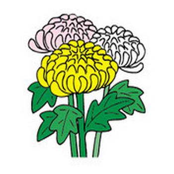 秋の花(菊)のイラストを見ながら、大菊人形展の思い出を・・・ イラスト collection