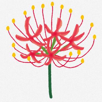 彼岸花のイラスト(花) | かわいいフリー素材集 いらすとや