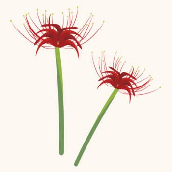 【花】彼岸花(ヒガンバナ)のイラスト | 商用フリー(無料)のイラスト素材なら「イラストマンション」