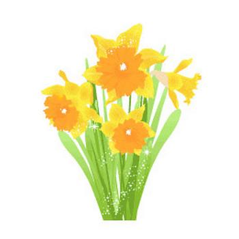 冬の花/水仙/の無料イラスト素材 - 花/素材/無料/イラスト/素材【花素材mayflower】モバイル/WEB/SNS