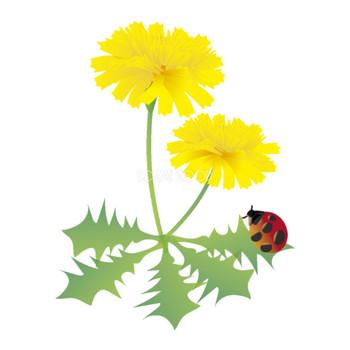 たんぽぽの花とてんとう虫の無料イラスト 春3~5月63537 | 素材Good
