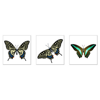蝶のイラスト - アゲハチョウ、シルエットなど|無料イラスト素材 ちいさないきもの