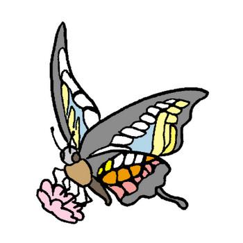 蝶1のイラスト | かわいいフリー素材が無料のイラストレイン