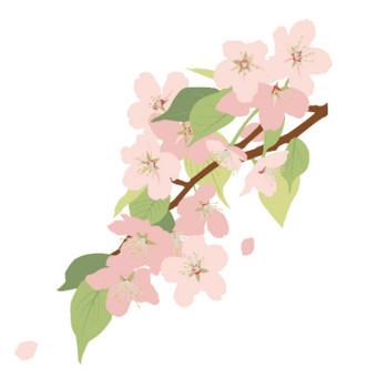 桜(ヤマザクラ)のフリーイラスト素材