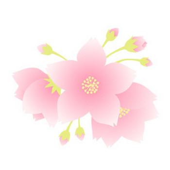 桜 - 素材【クリップアート】 - 彩クリWEB