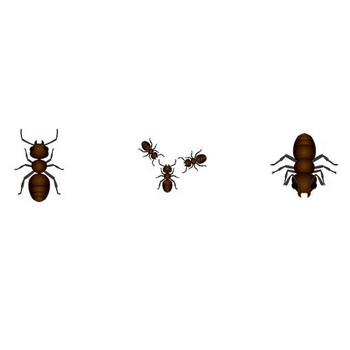 イラストポップ | 昆虫-アリのイラスト無料素材