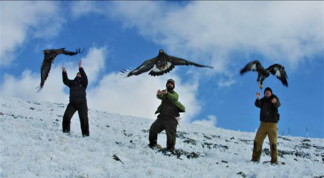 releasing eagles   bedrosian - Arctic Animals' Movement Patterns are Shifting in Different Ways as the Climate Changes