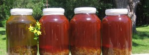Four Jars of St. John's Wort Oil