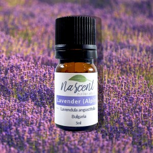 A 5ml bottle of Lavender Alpine in front of a photo background of Alpine Lavender growing in a field