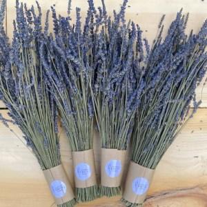 A closeup of 4 dried French Lavender Bundles