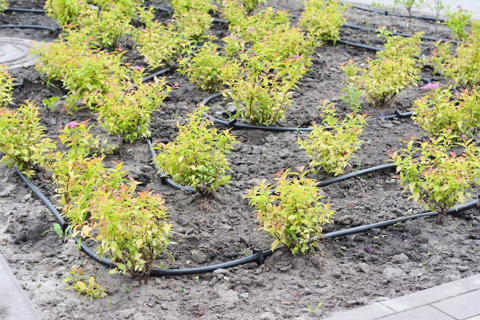 How to Place Drip Irrigation Tubes