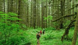Ekoturizm Nasıl Yapılır?