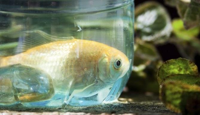 Plastik Kaplarda Balık Nasıl Beslenir?