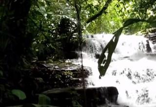 Kosta Rika Ve Yağmur Ormanları
