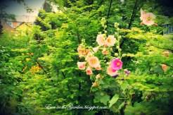ogrody-polskie-11