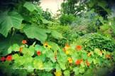 ogrody-polskie-24