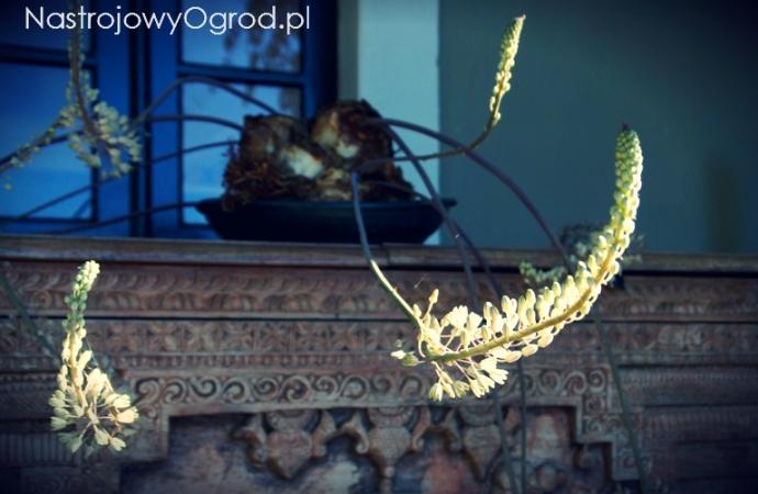 cebule-kwiatowe-2