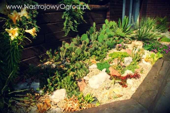 kaktusy-w-ogrodzie-1