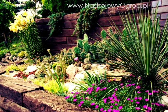 kaktusy-w-ogrodzie-3