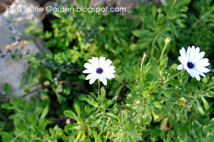 kwiaty-w-ogrodzie-17
