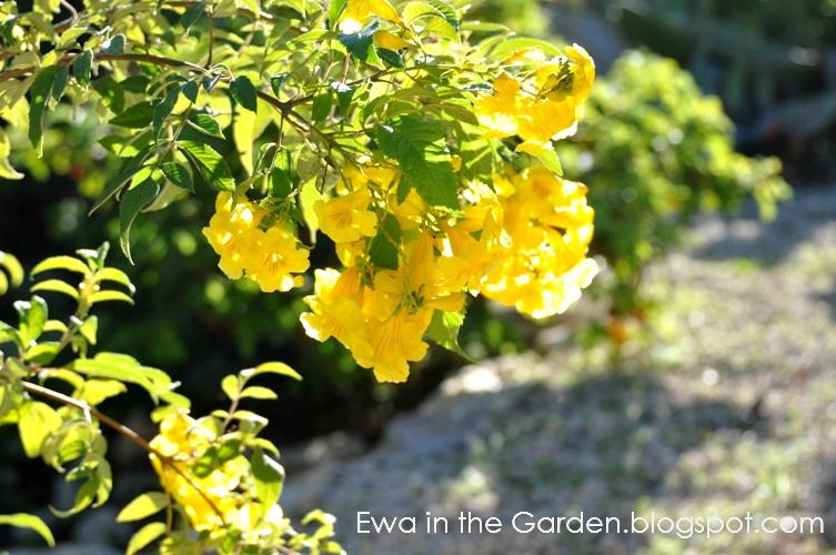 kwiaty-w-ogrodzie-3