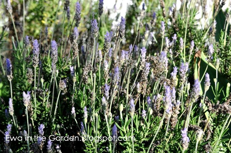 kwiaty-w-ogrodzie-9