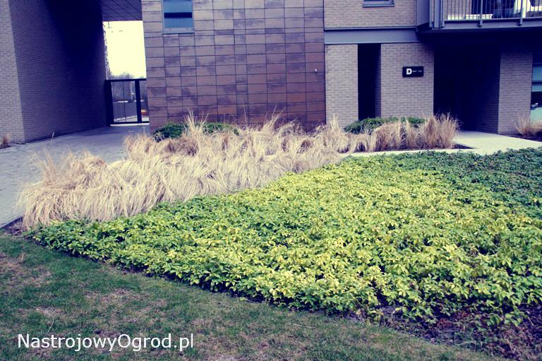 ogród-trawy-9