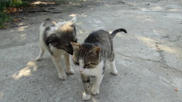 max si pisica