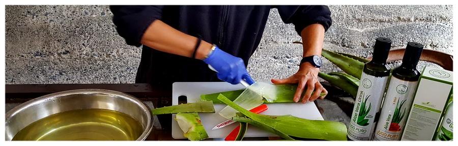 Aloes na wyspach Kanaryjskich, La Gamora.