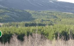 Haukadals skogur