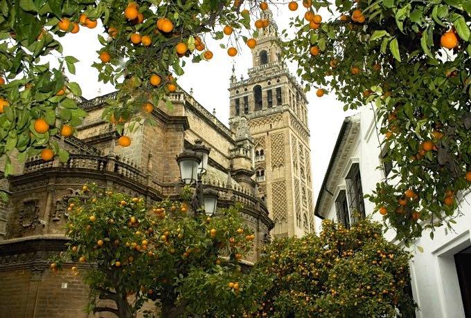 Naranjos en Sevilla - Version 2