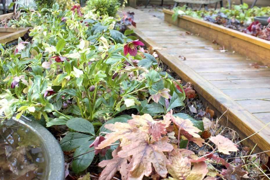 natalia lindberg trädgårdsdesign julros viv veronica alunrot sweet tea perennkombo