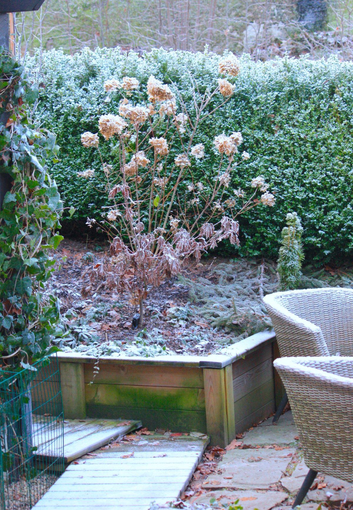 natalia lindberg trädgårdsdesign Hortensia limelight vinter