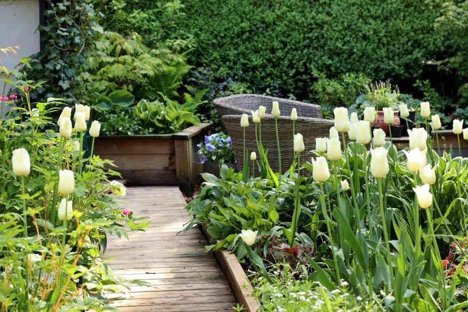 trädgång trädgård liten