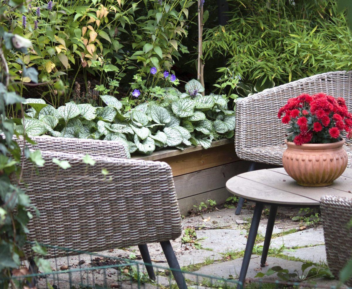 Natalia Lindberg Trädgårdsdesign - Trädgårdsnäva rozanne Kaukasisk förgetmigej jack frost geranium brunnera
