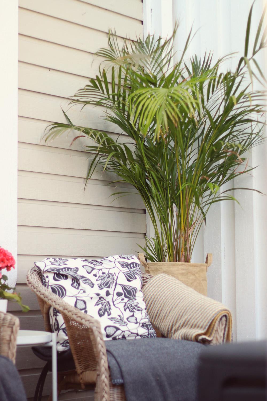 palm DYPSIS LUTESCENS  - natalia lindberg trädgårdsdesign
