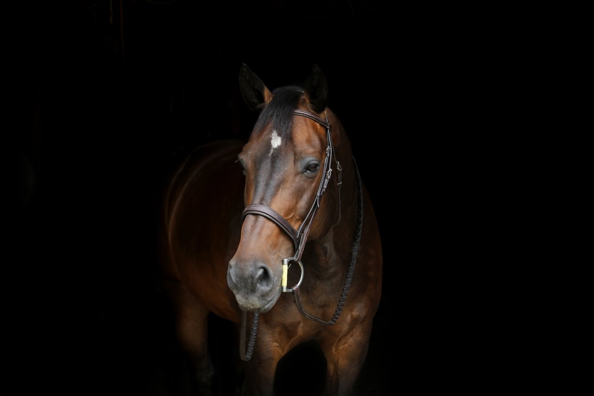 Horse Photo by Erin Dolson on Unsplash