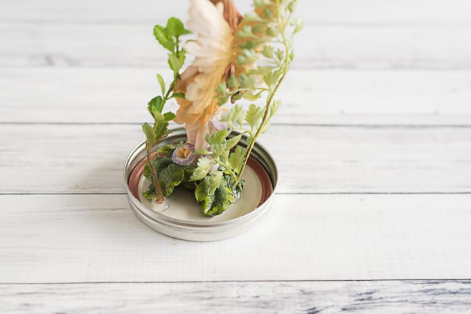 add-plants