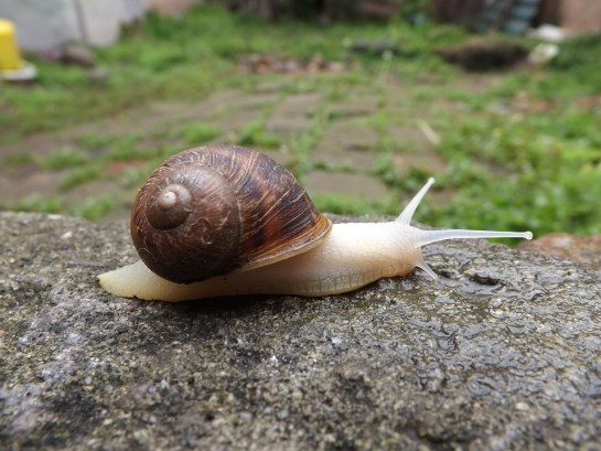 a-to-z-challenge-2017-travel-epiphanies-natasha-musing-W-walk-of-wisdom-snail