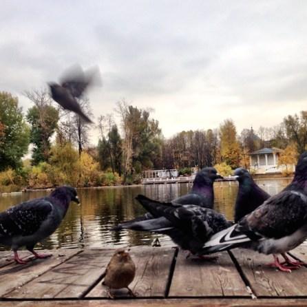 Gorky Park Mosca lago