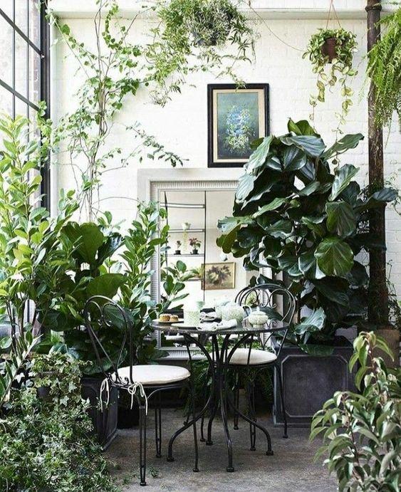 Впустим зелень в жизнь, растения