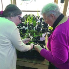 Holiday season never ends for local business. Camille Moran and Marie Monette, from left, check on seedlings in the nursery