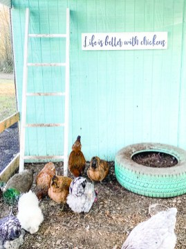 chicken-Life Is Better with Chickens