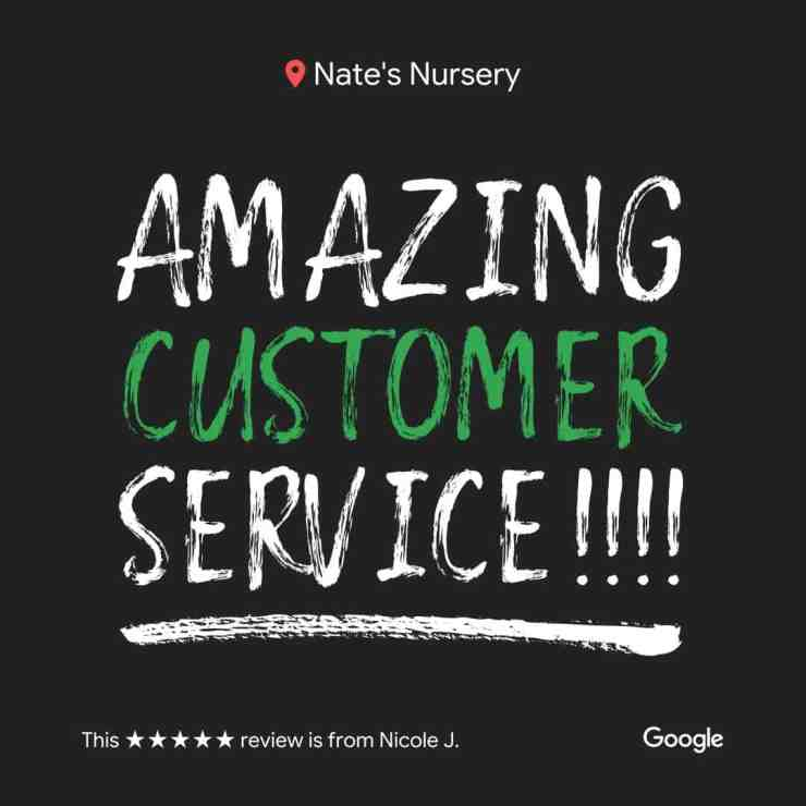 Customer Review Nate's Nursery