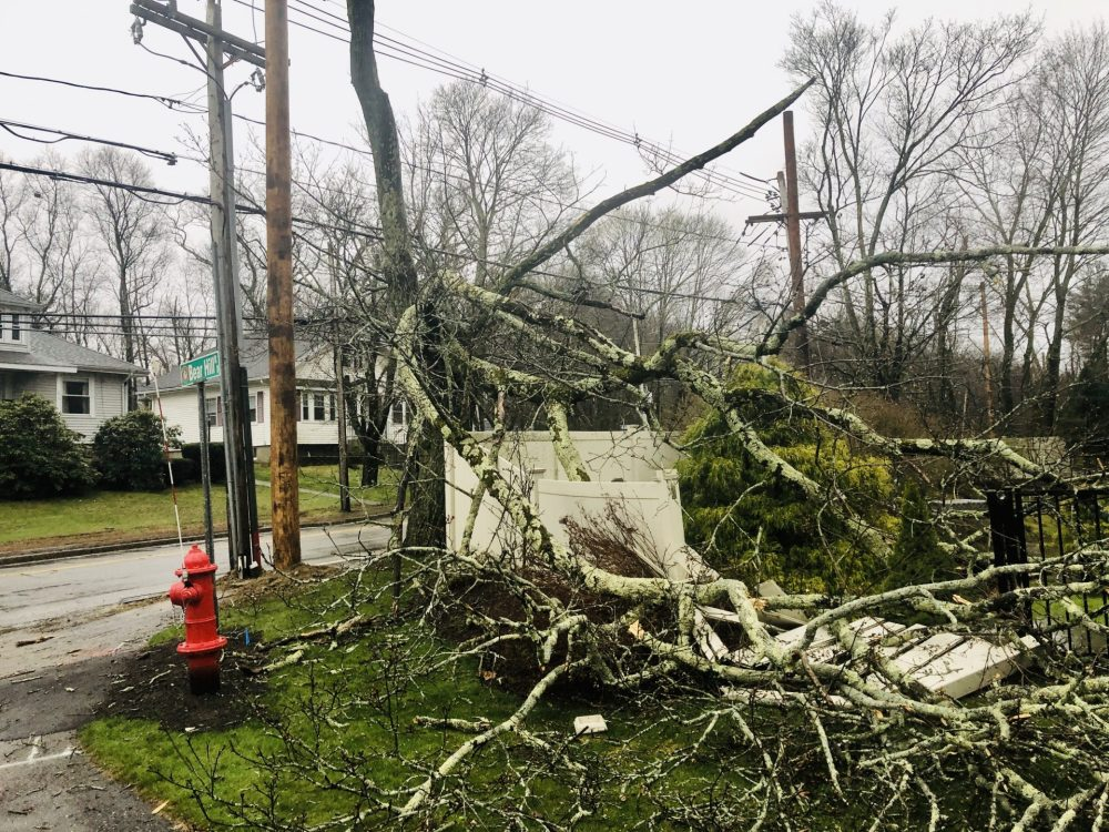 storm tree fence