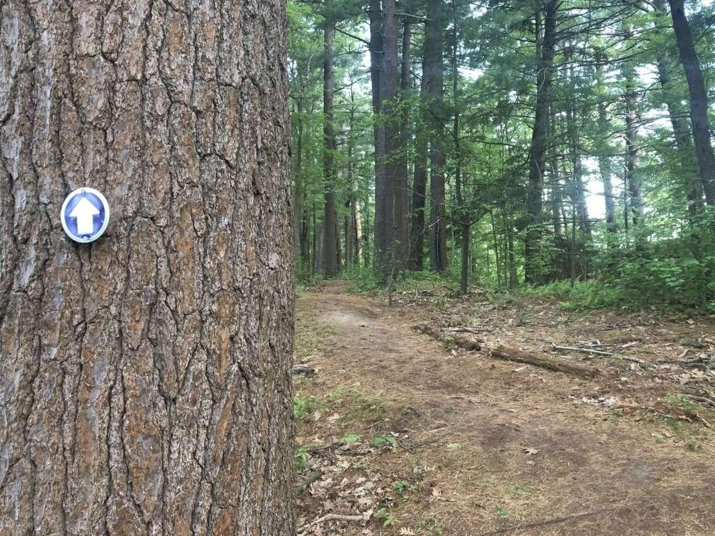 Pickeral Pond path
